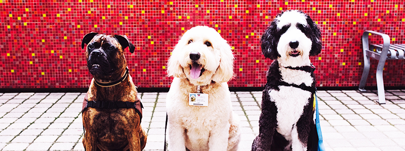 Volunteer Therapy Dogs - Dog Days of Summer - Children's Health